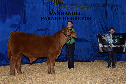 Foerster Cattle Champions